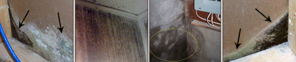 Growing mould in the basement